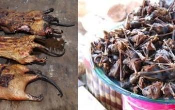FAO Warns of Ebola Danger through Consumption of Wildlife Species including Bush Meat & Fruit Bats