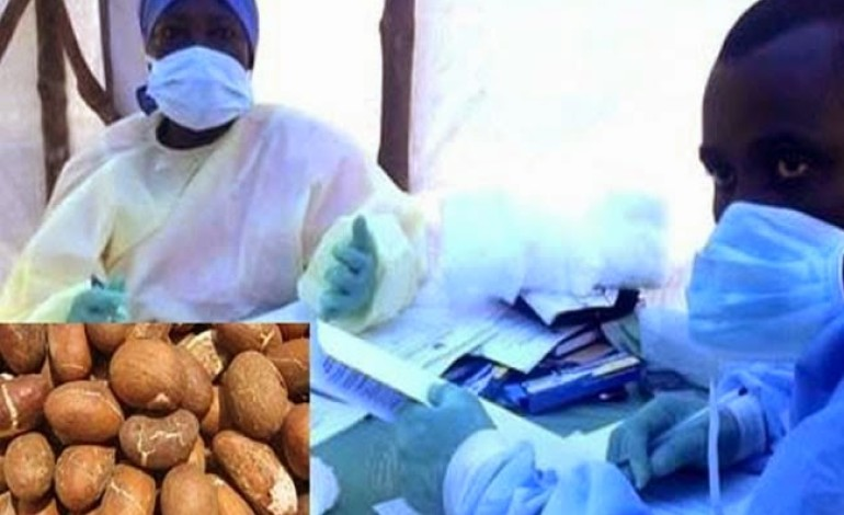 Good News! Bitter Kola Possible Cure For Ebola ––US-base Nigerian Doctor