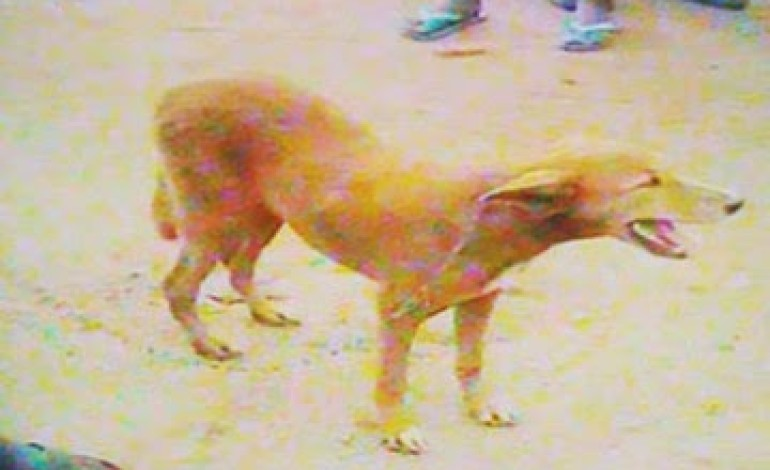 This is Madness! 19 year old slept with a dog in Edo