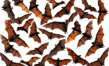 Burkina Faso Bans Hunting for Bats over Ebola Fears