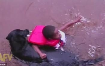 Awww So Cute…Dog Tries to Rescue Swimming Boy – Watch!