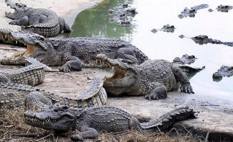 Depressed Woman Jumps Into A Crocodile-filled Pond, Ripped Apart In Minutes