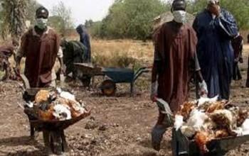Nigeria: Bird Flu Hits 4 More States, Raising The Total To 11