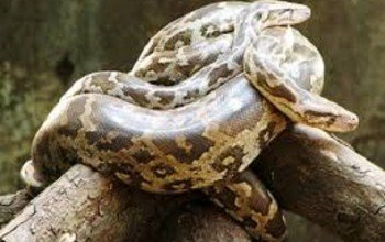 Boko Haram Battles Nigerian Troops Using Snakes (Photo)