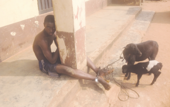 Teenager caught having sex with a sheep in Enugu (photo)