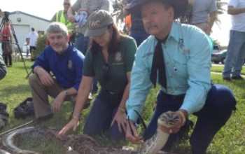Who Needs the Powerball?  Capture / Kill an Enormous Python in Florida & Win Cash!