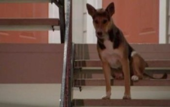 Dog Waits Weeks for Murdered Owner to Come Home (Video)