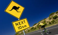 Kangaroo Bounds On Bikers, Breaking Breasts