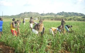 Ex-militants to go into farming – FG