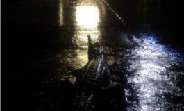 Australia floods: Crocodiles seen in 'once in a century' waters
