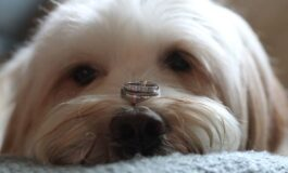 Dog eats woman's engagement ring during photo-op fail, alarming Reddit users